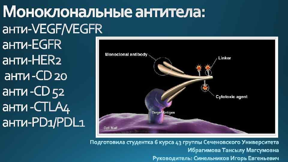 Моноклональные антитела: анти-VEGF/VEGFR анти-HER 2 анти -CD 20 анти -CD 52 анти -CTLA 4