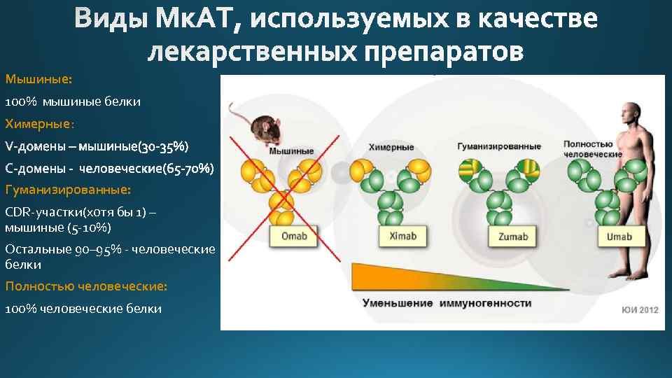 Мышиные: 100% мышиные белки Химерные: Гуманизированные: CDR-участки(хотя бы 1) – мышиные (5 -10%) Остальные