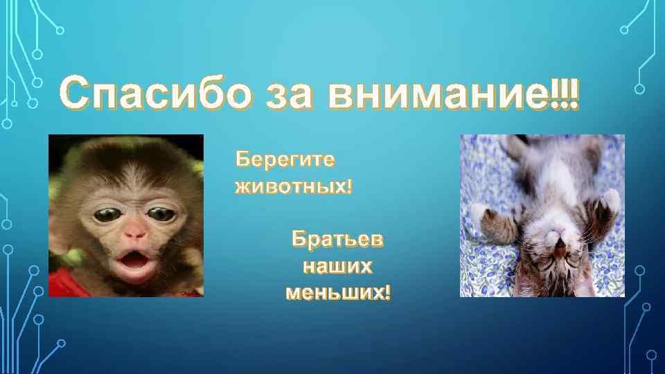 Спасибо за внимание!!! Берегите животных! Братьев наших меньших!