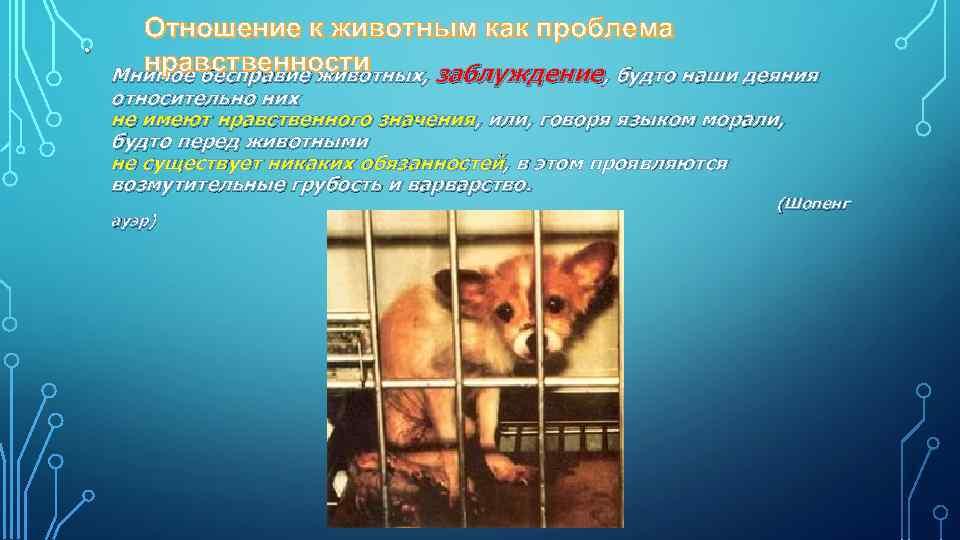 • Отношение к животным как проблема нравственности Мнимое бесправие животных, заблуждение, будто наши