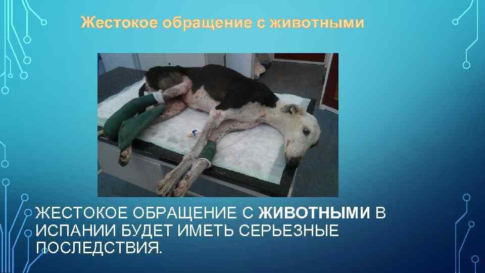 Жестокое обращение с животными ЖЕСТОКОЕ ОБРАЩЕНИЕ С ЖИВОТНЫМИ В ИСПАНИИ БУДЕТ ИМЕТЬ СЕРЬЕЗНЫЕ ПОСЛЕДСТВИЯ.