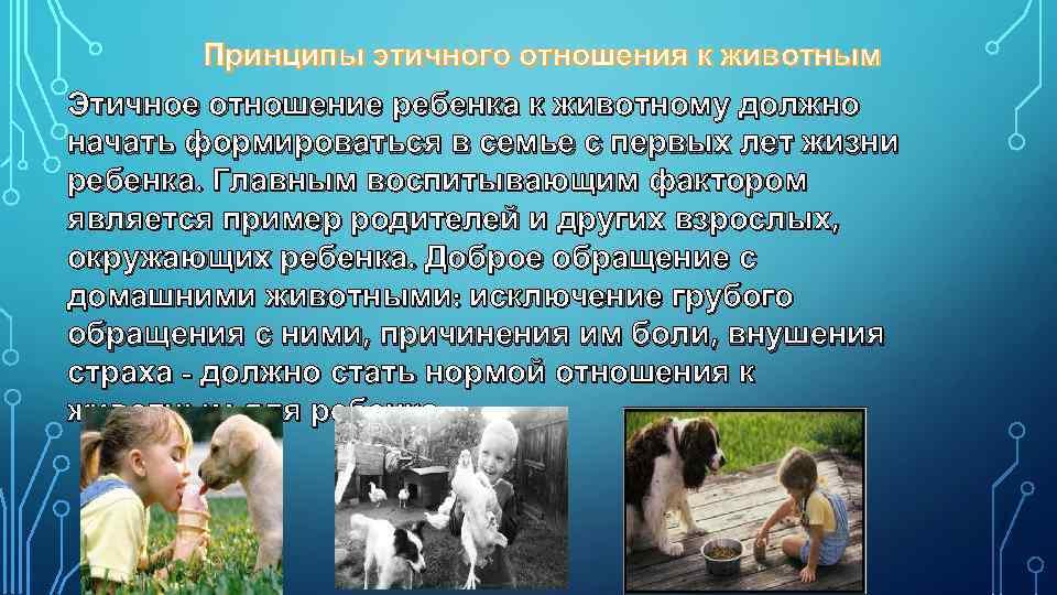Принципы этичного отношения к животным Этичное отношение ребенка к животному должно начать формироваться в
