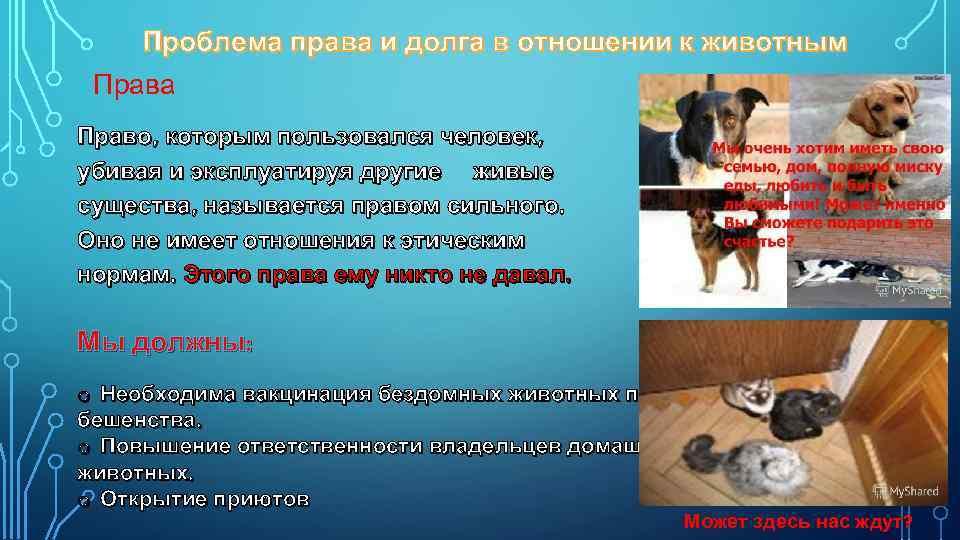 Проблема права и долга в отношении к животным Права Право, которым пользовался человек, убивая
