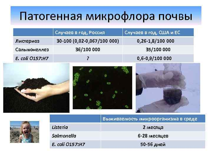Патогенная микрофлора почвы Случаев в год, Россия Листериоз 30 -100 (0, 02 -0, 067/100