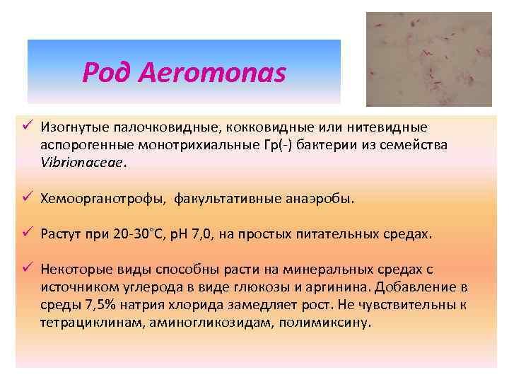 Род Aeromonas ü Изогнутые палочковидные, кокковидные или нитевидные аспорогенные монотрихиальные Гр(-) бактерии из семейства
