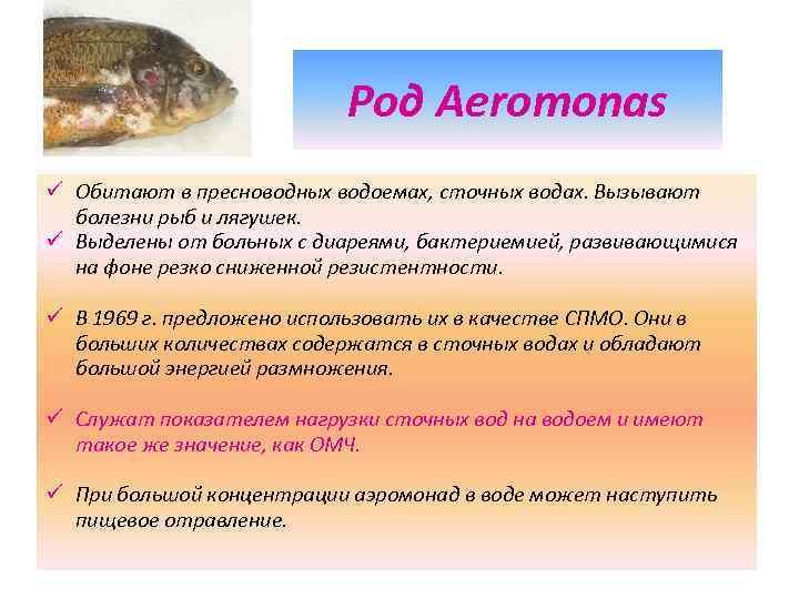 Род Aeromonas ü Обитают в пресноводных водоемах, сточных водах. Вызывают болезни рыб и лягушек.