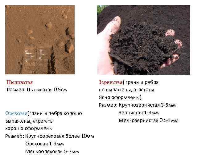 Пыливатая Размер: Пыливатая 0. 5 см Ореховая(грани и ребра хорошо выражены, агрегаты хорошо оформлены