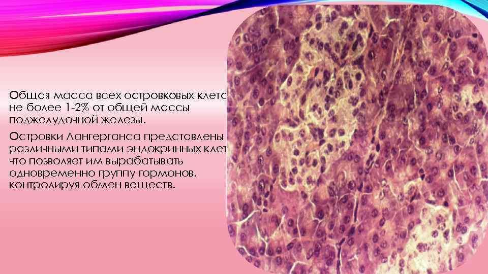 Диабет и пересадка островковых клеток