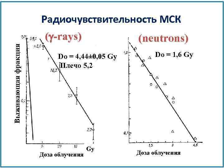 Радиочувствительность МСК Выживающая фракция (g-rays) (neutrons) Do = 4, 44± 0, 05 Gy Плечо