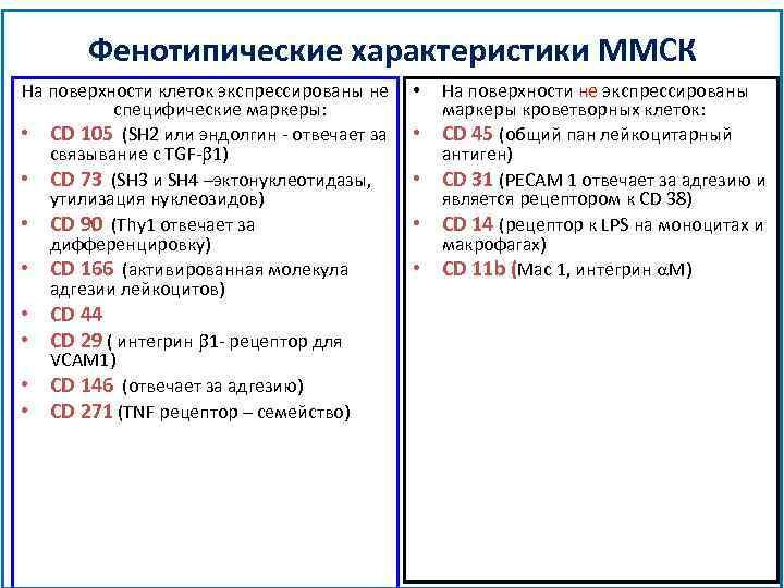 Фенотипические характеристики ММСК На поверхности клеток экспрессированы не специфические маркеры: • CD 105 (SH