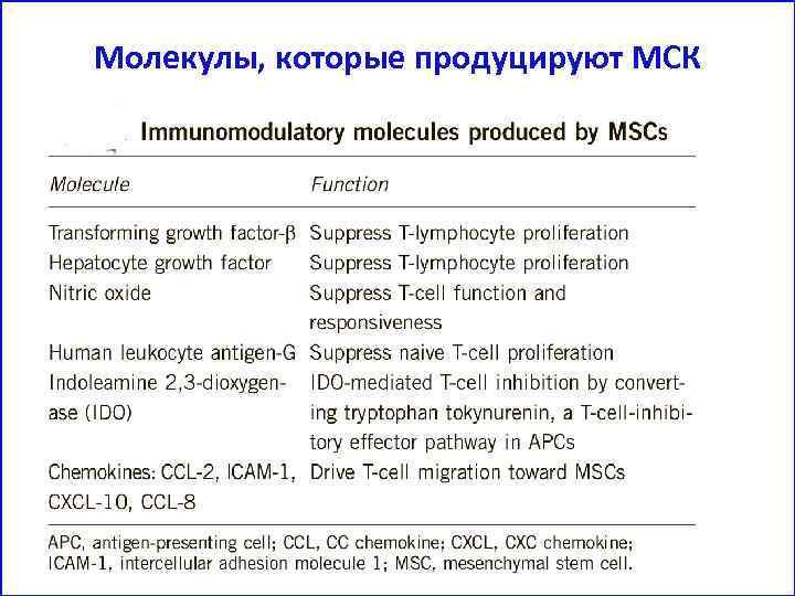Молекулы, которые продуцируют МСК