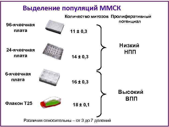 Выделение популяций ММСК 96 -ячеечная плата Количество митозов Пролиферативный потенциал 11 ± 0, 3