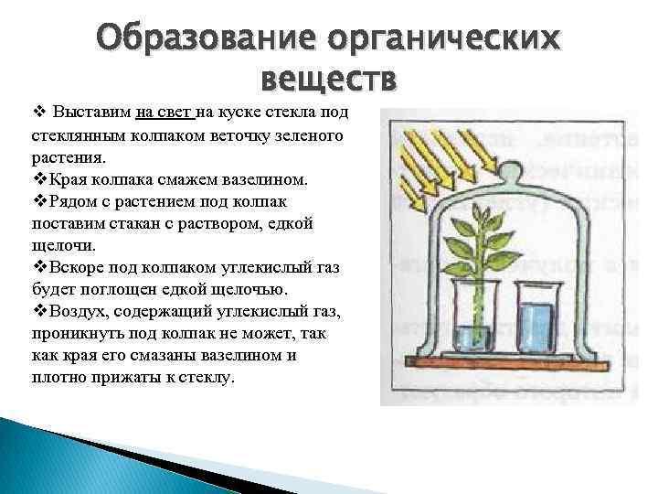 Образование органических веществ v Выставим на свет на куске стекла под стеклянным колпаком веточку