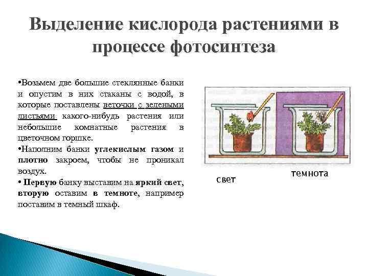 Выделение кислорода растениями в процессе фотосинтеза • Возьмем две большие стеклянные банки и опустим