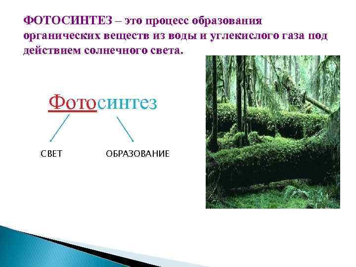 ФОТОСИНТЕЗ – это процесс образования органических веществ из воды и углекислого газа под действием