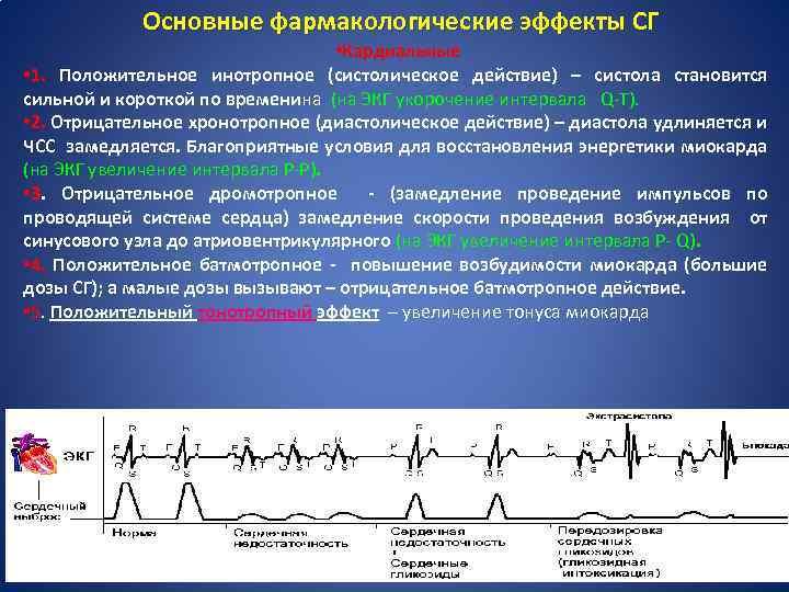 Основные фармакологические эффекты СГ • Кардиальные • 1. Положительное инотропное (систолическое действие) – систола