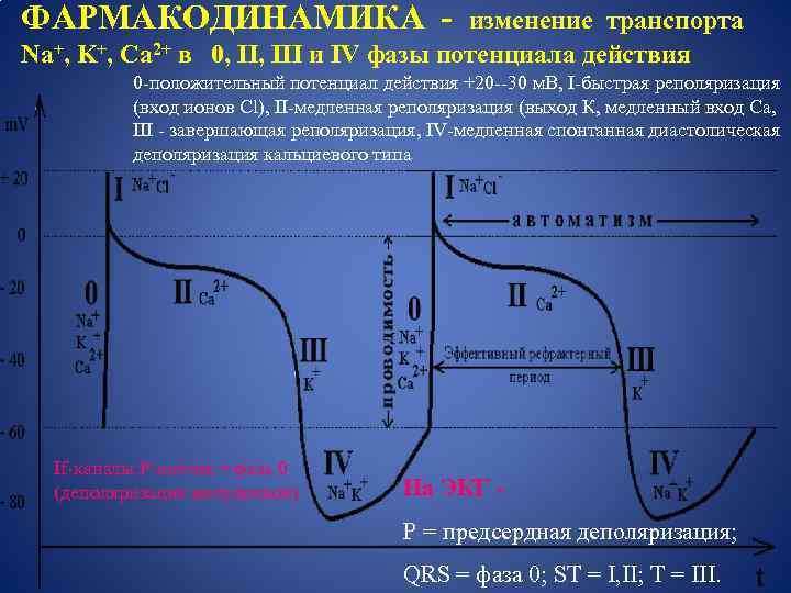 ФАРМАКОДИНАМИКА - изменение транспорта Na+, K+, Ca 2+ в 0, III и IV фазы