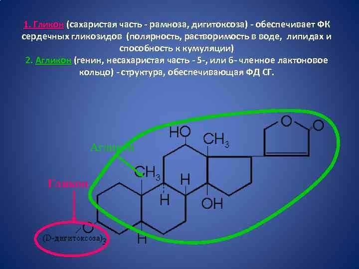 1. Гликон (сахаристая часть - рамноза, дигитоксоза) - обеспечивает ФК сердечных гликозидов (полярность, растворимость