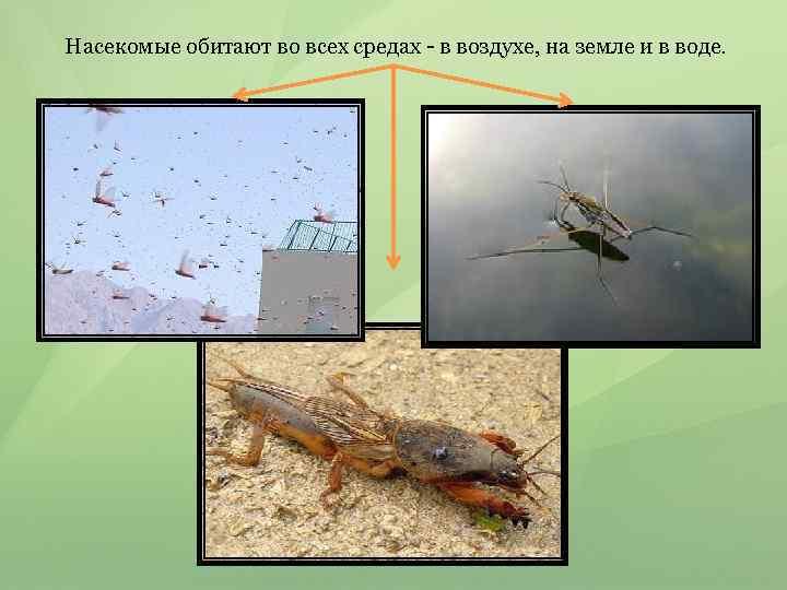 Насекомые обитают во всех средах - в воздухе, на земле и в воде.