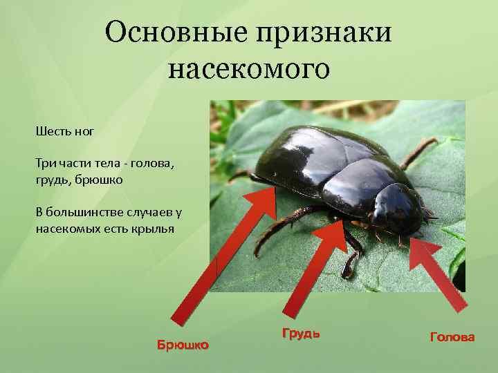 Основные признаки насекомого Шесть ног Три части тела - голова, грудь, брюшко В большинстве