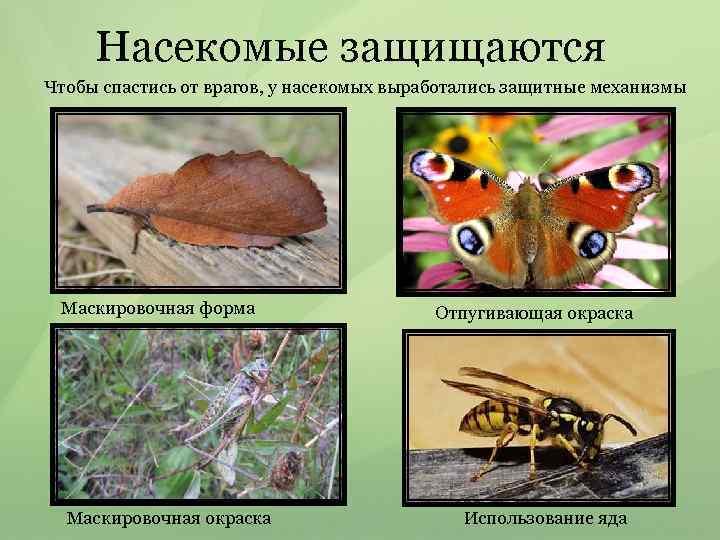Насекомые защищаются Чтобы спастись от врагов, у насекомых выработались защитные механизмы Маскировочная форма Маскировочная