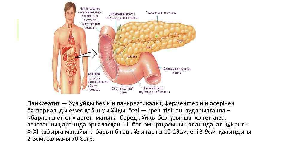 Панкреатит — бұл ұйқы безінің панкреатикалық ферменттерінің әсерінен бактериальды емес қабынуы Ұйқы безі —