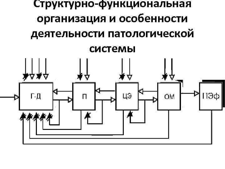 Структурно-функциональная организация и особенности деятельности патологической системы