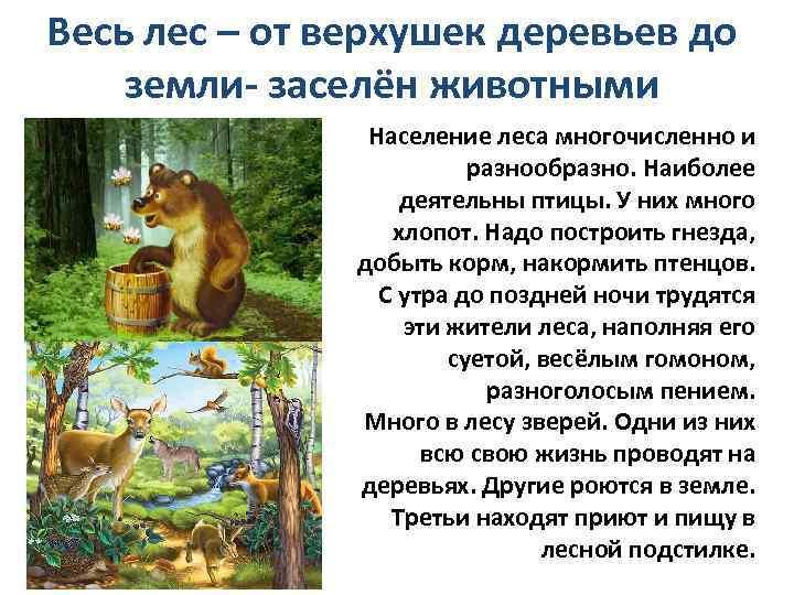 лес описание