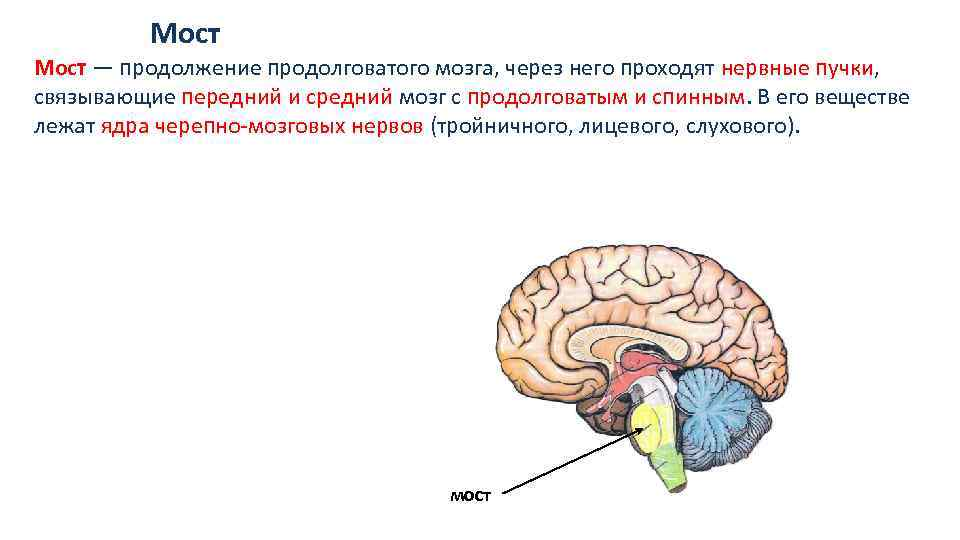 Пол деннисон гимнастика мозга в картинках так