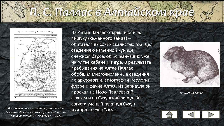 П. С. Паллас в Алтайском крае Восточная половина карты, созданной в Колывано-Воскресенском горном ведомстве