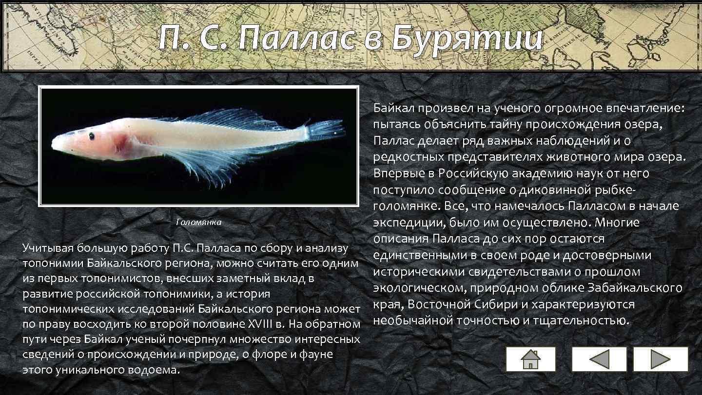 П. С. Паллас в Бурятии Байкал произвел на ученого огромное впечатление: пытаясь объяснить тайну