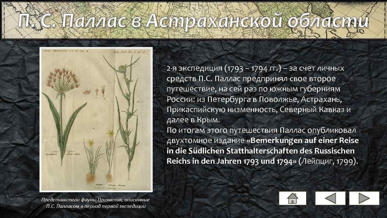 П. С. Паллас в Астраханской области 2 -я экспедиция (1793 – 1794 гг. )