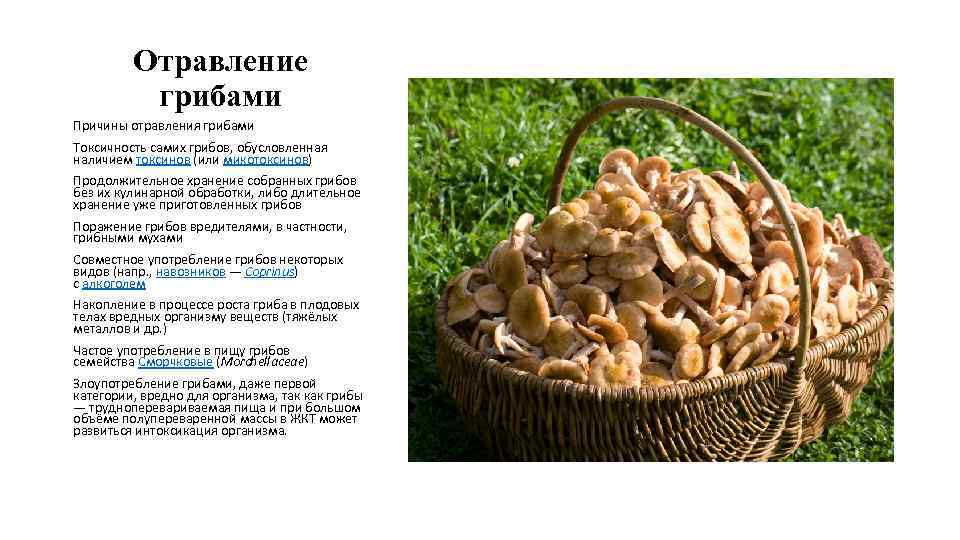 При отравление грибами что делать в домашних условиях 29