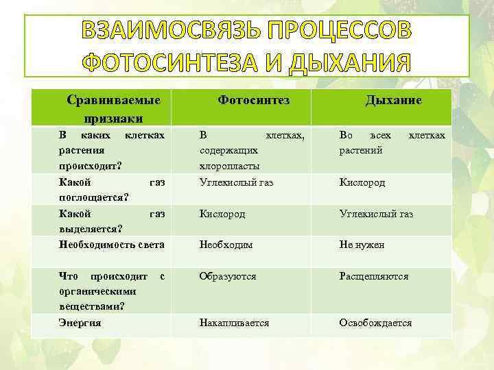 характеристика процесса фотосинтеза растений территории