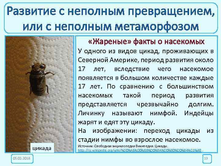 Развитие с неполным превращением, или с неполным метаморфозом «Жареные» факты о насекомых Личинка саранча