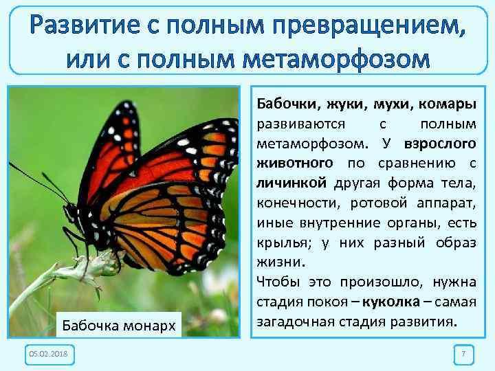 Развитие с полным превращением, или с полным метаморфозом Бабочка монарх 05. 02. 2018 Бабочки,