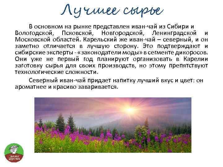 Лучшее сырье В основном на рынке представлен иван-чай из Сибири и Вологодской, Псковской, Новгородской,