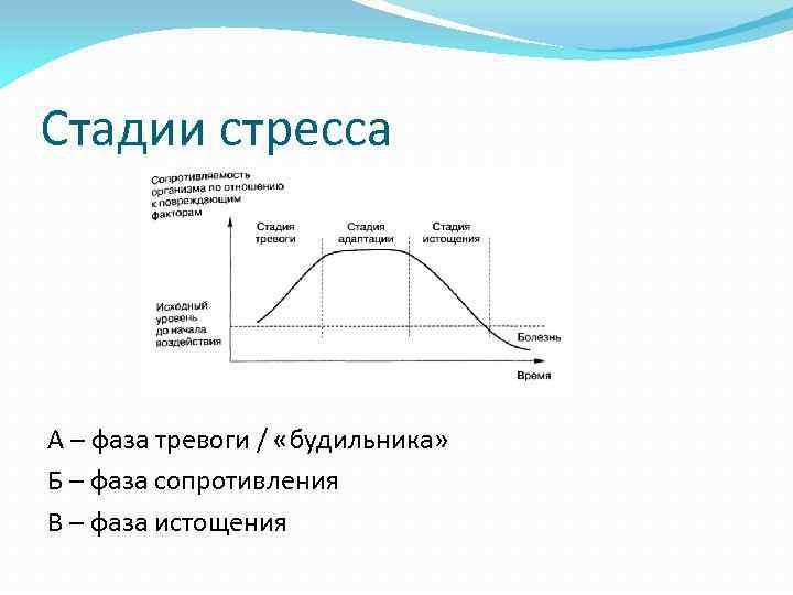 Стадии стресса А – фаза тревоги / «будильника» Б – фаза сопротивления В –