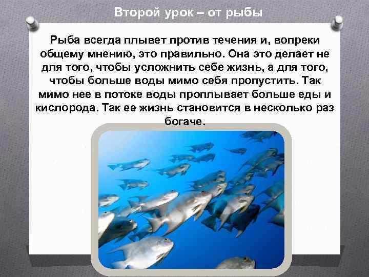 Второй урок – от рыбы Рыба всегда плывет против течения и, вопреки общему мнению,