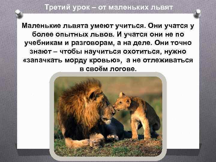 Третий урок – от маленьких львят Маленькие львята умеют учиться. Они учатся у более
