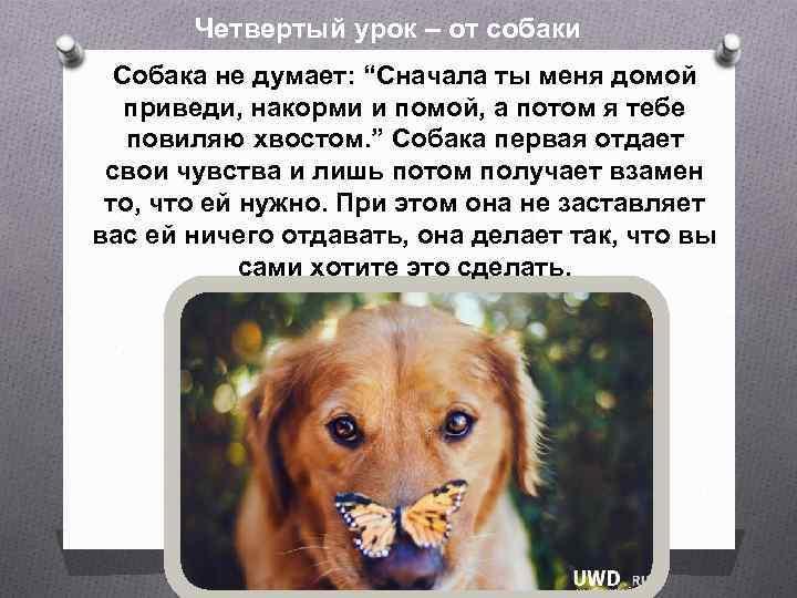 """Четвертый урок – от собаки Собака не думает: """"Сначала ты меня домой приведи, накорми"""
