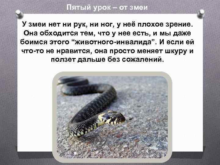Пятый урок – от змеи У змеи нет ни рук, ни ног, у неё