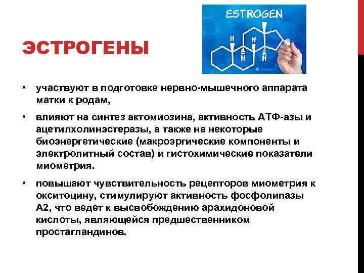 ЭСТРОГЕНЫ • участвуют в подготовке нервно-мышечного аппарата матки к родам, • влияют на синтез