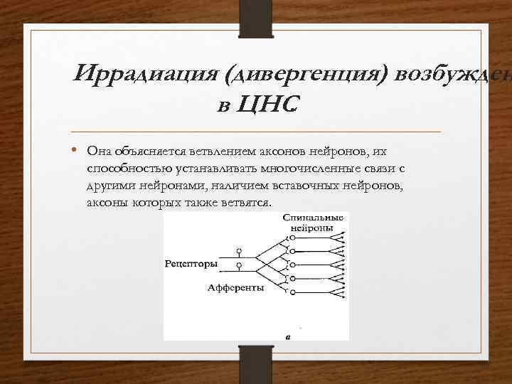 Иррадиация (дивергенция) возбужден в ЦНС. • Она объясняется ветвлением аксонов нейронов, их способностью устанавливать