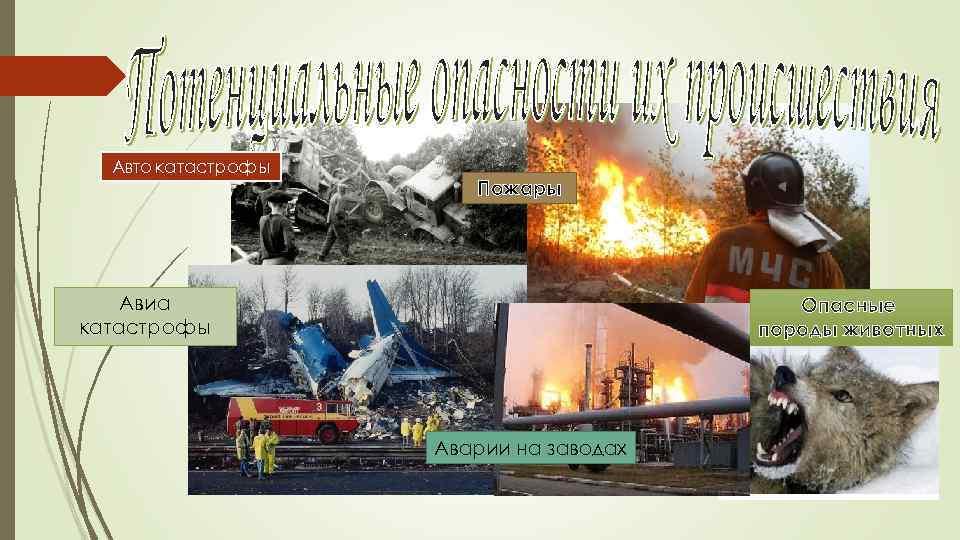 Авто катастрофы Пожары Авиа катастрофы Опасные породы животных Аварии на заводах