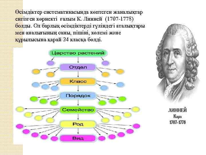 Өсiмдiктер систематикасында көптеген жаналықтар енгiзген көрнектi ғалым К. Линней (1707 -1778) болды. Ол барлық