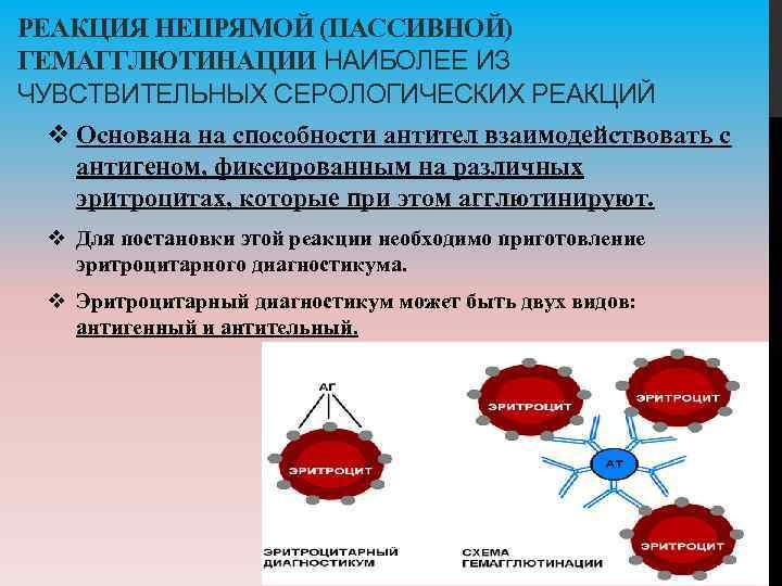РЕАКЦИЯ НЕПРЯМОЙ (ПАССИВНОЙ) ГЕМАГГЛЮТИНАЦИИ НАИБОЛЕЕ ИЗ ЧУВСТВИТЕЛЬНЫХ СЕРОЛОГИЧЕСКИХ РЕАКЦИЙ v Основана на способности антител