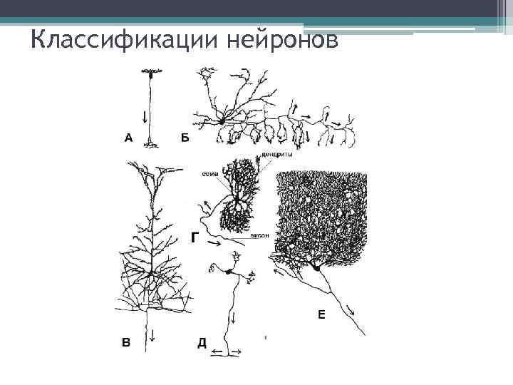 Классификации нейронов