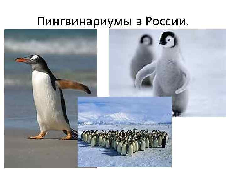 Пингвинариумы в России.