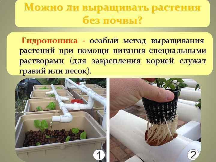 выращивание растений без почвы гидропоника